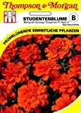 Studentenblume Marigold-Durango Tangerine F1 Hybride von Thompson & Morgan