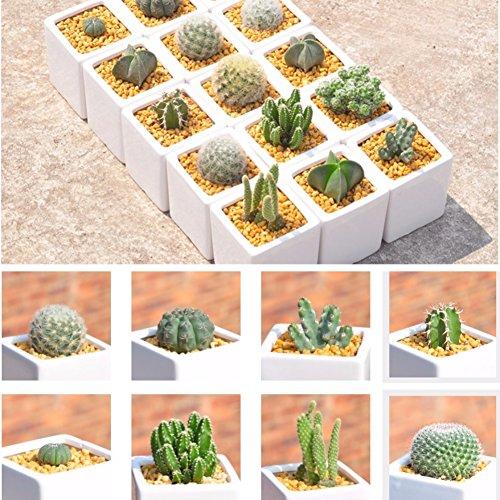 ESHOO 500 Stück Kaktus Samen Mix Zierpflanzen Samen Hofgarten mit Blumensamen - Kaktus Mix