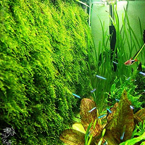 Kit de malla para Musgo de pared (planta no incluída) para decorar acuarios.