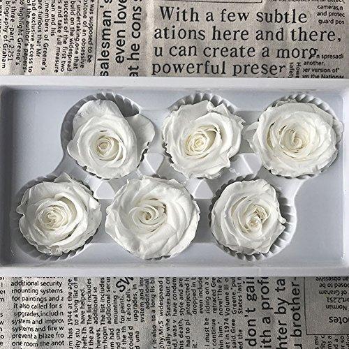 Ancdream 6 Echte, Konservierte Rosenköpfe; Blütenfarbe Weiß