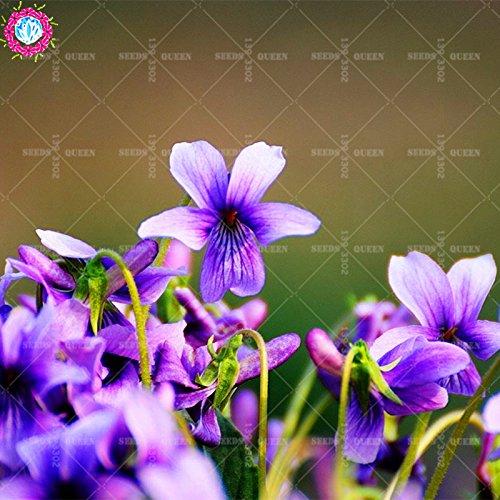 OFF !! 50 pcs / sac réel Viola graines de plantes de graines de légumes et de fruits en pot Maison et jardin 95% fleurs bonsaï taux de germination 2