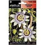 Semillas Batlle 095801BOLS - Pasionaria Trepadora blanca