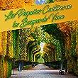 Los Pequeños Cantores en los Bosques de Viena