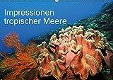 Impressionen tropischer Meere (Wandkalender 2019 DIN A2 quer): Die faszinierende Unterwasserwelt tropischer Meere (Monat
