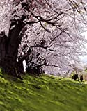 5x7ft Rosa Blumen Baum Grün Rasen Landschaft Fotografie Hintergrund Computer-gedruckt Vinyl Kulissen