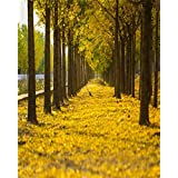 AOFOTO 4x5ft Row Of Yellow Tree Photography Studio Backdrop Fall Background Autumn Nature Scenic Fallen Leaves Avenue Kid Lovers Adult Artistic Portrait Wedding Photoshoot Props Video Drape Wallpaper