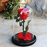 Zhuotop Rose Blume konserviert; Rose für die Ewigkeit, unsterbliche frische Rose, Glasbezug Einzigartiges Geschenk rote rose