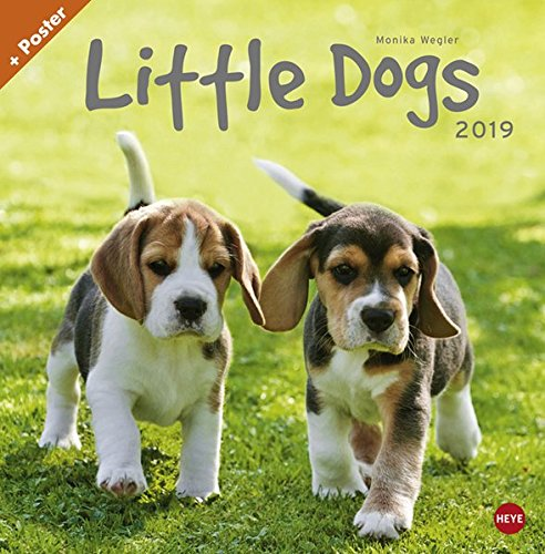 Wegler Little Dogs Broschurkalender - Kalender 2019 (Welpen-kalender-kleine)