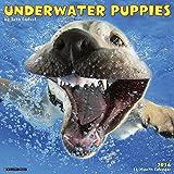 2016 Underwater Puppies Wall Calendar by Seth Casteel (2015-08-16)