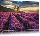 Traumhafte Lavendel Provence mit einsamen Baum Format: 80x60 auf Leinwand, XXL riesige Bilder fertig gerahmt mit Keilrahmen, Kunstdruck auf Wandbild mit Rahmen, günstiger als Gemälde oder Ölbild, kein Poster oder Plakat