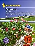 Kiepenkerl Erdbeere Toscana (Pillen - Saat )