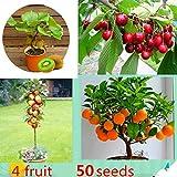 KEPTEI Garten Mini Bonsai Obst baum Samen Actinidia chinensis Kirschebaum Apfelbaum Citrusbaum Gemischtbaum Samen, 50 Stück/Pack