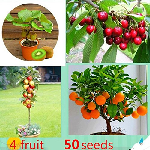 ZEARO 50 PCS Graines Mélangées d'Orange, Pomme, Cerise, Kiwi Graines de Fruit Bonsai Fruit Seeds