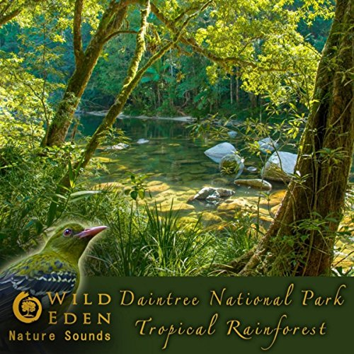 Morning Bird Orchestra (Tropical Bird Sounds And Bird Songs) [For Mindfulness Meditation And As Natural Anxiety Remedy] - Morning Song Wild Bird