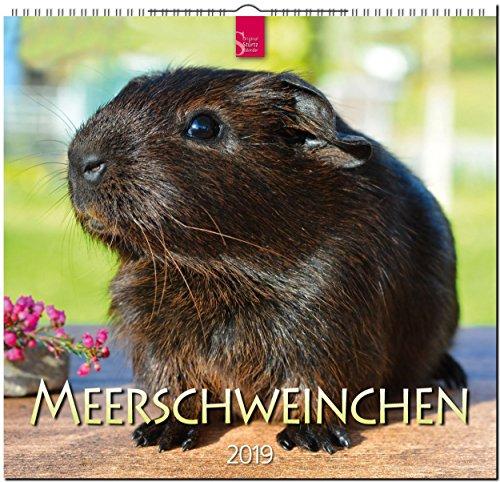 MF-Kalender MEERSCHWEINCHEN 2019