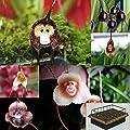 3-teiliges Set Mini-Gewächshaus 10 Affengesicht Orchideen Monkey Face Samen & Anzuchterde von Markenlos auf Du und dein Garten