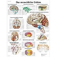 3B Scientific Lehrtafel - Das menschliche Gehirn