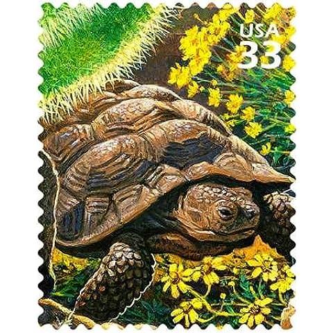 Deserto Tartaruga da noi servizio postale–stampa fine