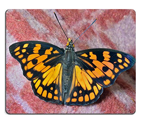 Liili mouse pad Natural rubber Mousepad Image ID 33564523 a Close Up of the Butterfly Sephisa Dichroa Princeps