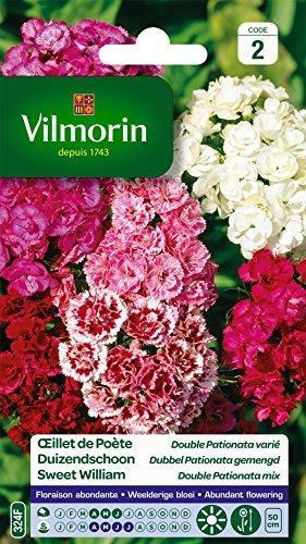 Vilmorin 5437942 Œillet, Multicolore, 90 x 2 x 160 cm