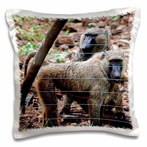 Danita Delimont - Alida Latham - Primates - Africa, Cameroon, Limbe. Drill monkeys at Limbe Wildlife Center. - 16x16 inch Pillow Case (pc_187172_1)
