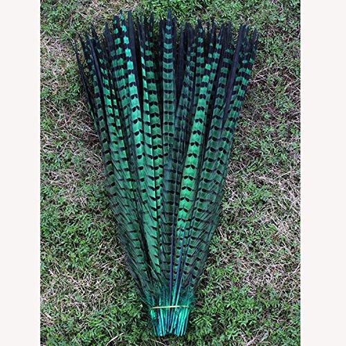 Fasan Schwanz Federn natur Schöne Farbe Samba Kleidung 30,5–35,6cm ()