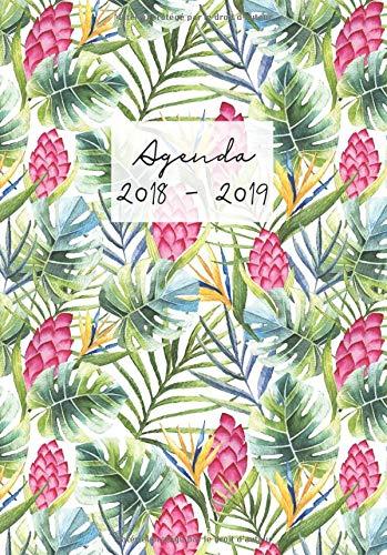 Agenda 2018-2019: Agenda Scolaire de Juillet 2018 à Août 2019, A5, motif palmier tropical