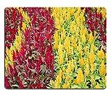 Die besten Liili Schreibtische - Mousepads Colorful schlichthauben Cockscomb Blumen oder Silber-Brandschopf Blossom Bewertungen
