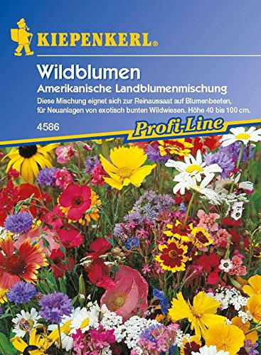 Wildblumen Amerikanische Landblumenmischung von Kiepenkerl