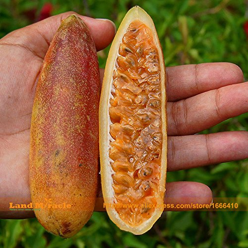 Passion Banana rares Graines de fruits, 20 graines/Pack, Pink Flower Tropical Garden Miracle Passiflora-Land