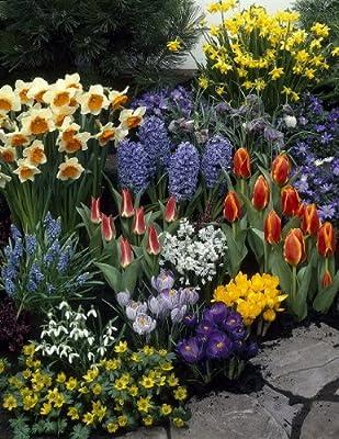 Sortiment 4 - 128 Blumenzwiebel Buntes Farb-Mix, Narzissen + Tulpen + Hyazinthen + Krokusse + Schneeglöckchen von Amazon.de Pflanzenservice - Du und dein Garten