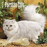 Persian Cats (Wall-Kalender)