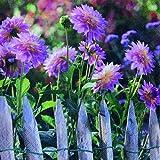 20 Servietten Blühende Gartenblumen / Blumen / Garten 33x33cm