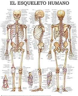 El esqueleto humano - Guía rápida de referencia: Ideal