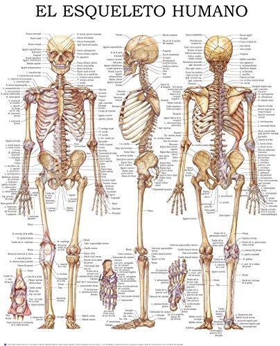Descargar Libro El esqueleto humano - Guía rápida de referencia: Ideal para estudiantes, pacientes y médicos para tener una detallada vista del esqueleto humano. de HC-HealthComm