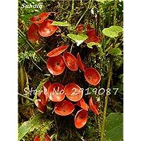 Nuevo 50 semillas PC Reishi Ganoderma lucidum Setas Semillas de vegetales orgánicos de semillas para jardín de plantas no-GMO 5