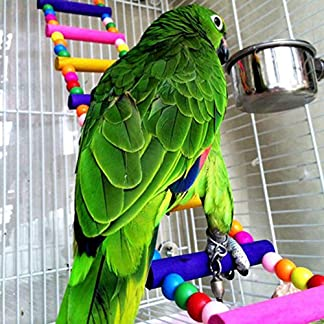 Globeagle Pet Bird Wood Ladder Climb Parrot Macaw Cage Swing Shelf 56cm 11