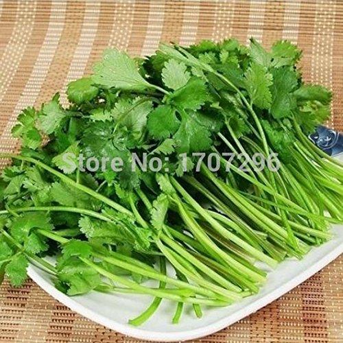 Légume balcon de semences graines de persil quatre grandes saisons peuvent pousser les graines de coriandre plantes Bonsai pour la maison et le jardin - 80 pcs / lot
