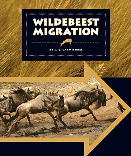 Wildebeest Migration (Animal Migrations)