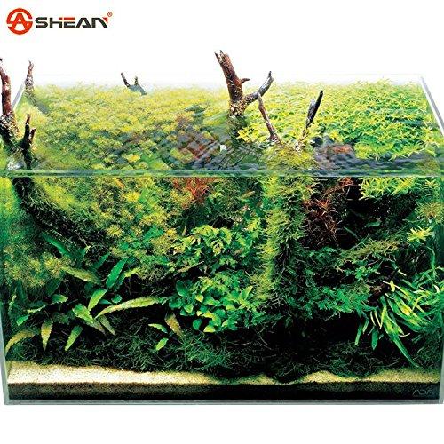 Hot vente gazons Semences à gazon (Golf Terrains de soccer Villa) Graines catégorie spéciale Evergreen Lawn 200 Seeds