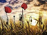 Artland Qualitätsbilder I Wandbilder Selbstklebende Wandfolie 120 x 90 cm Botanik Blumen Mohnblume Foto Bunt C6YG Mohnblumen im Sonnenuntergang
