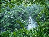 Poster 40 x 30 cm: Tropical Jungle de xPACIFICA/National Geographic - Reproduction Haut de Gamme, Nouveau Poster