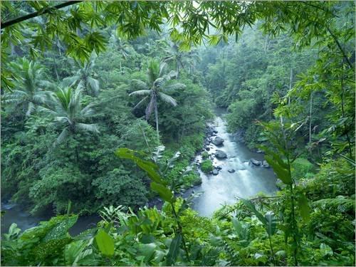 Acrylglasbild 120 x 90 cm: tropischer Dschungel von xPACIFICA/National Geographic - Wandbild, Acryl Glasbild, Druck auf Acryl Glas Bild