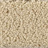 BODENMEISTER BM72182 Teppichboden Auslegware Meterware Hochflor Shaggy Langflor Velour beige weiß 400 cm und 500 cm breit, verschiedene Längen, Variante: 4 x 4 m