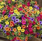 ZIXI Samen 100 stücke Hängende Petunien, Garten Gefüllte Hängende Petunien Winter Hardy Blumensamen Mehrjährige Blumentöpfe Samen für Hausgarten, balkon, terrasse