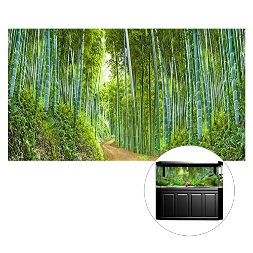Easy-topbuy Single-Sided Digital Printing 61 * 30cm/91 * 50cm Aquarium Fish Tank Background Decorative Painting Thickened PVC Bamboo Forest Vivid Scene yg011307