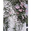 Ausziehbares Rankgitter Kunststoff weiß–100x 200cm von generique bei Du und dein Garten