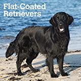Flat Coated Retrievers 2019 Calendar