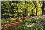 Wallario Garten-Poster Outdoor-Poster - Blaues Hasenglöckchen im Sommerwald in Premiumqualität, Größe: 61 x 91,5 cm, für den Außeneinsatz geeignet