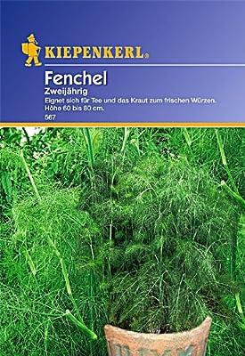 Kiepenkerl Fenchel Mehrjährig von Kiepenkerl - Du und dein Garten